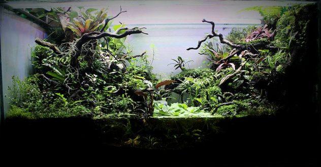 Paludarium Aquair Aquascape