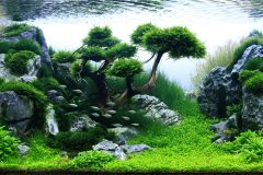 Gaya Aliran Aquascape
