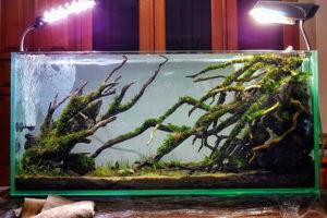Beranda Aquair Indonesia Aquascape When Nature Gives Inspiration
